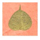 Gold Bodhi Leaf Card